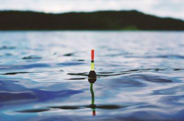 Spearfishing in a Big Net World