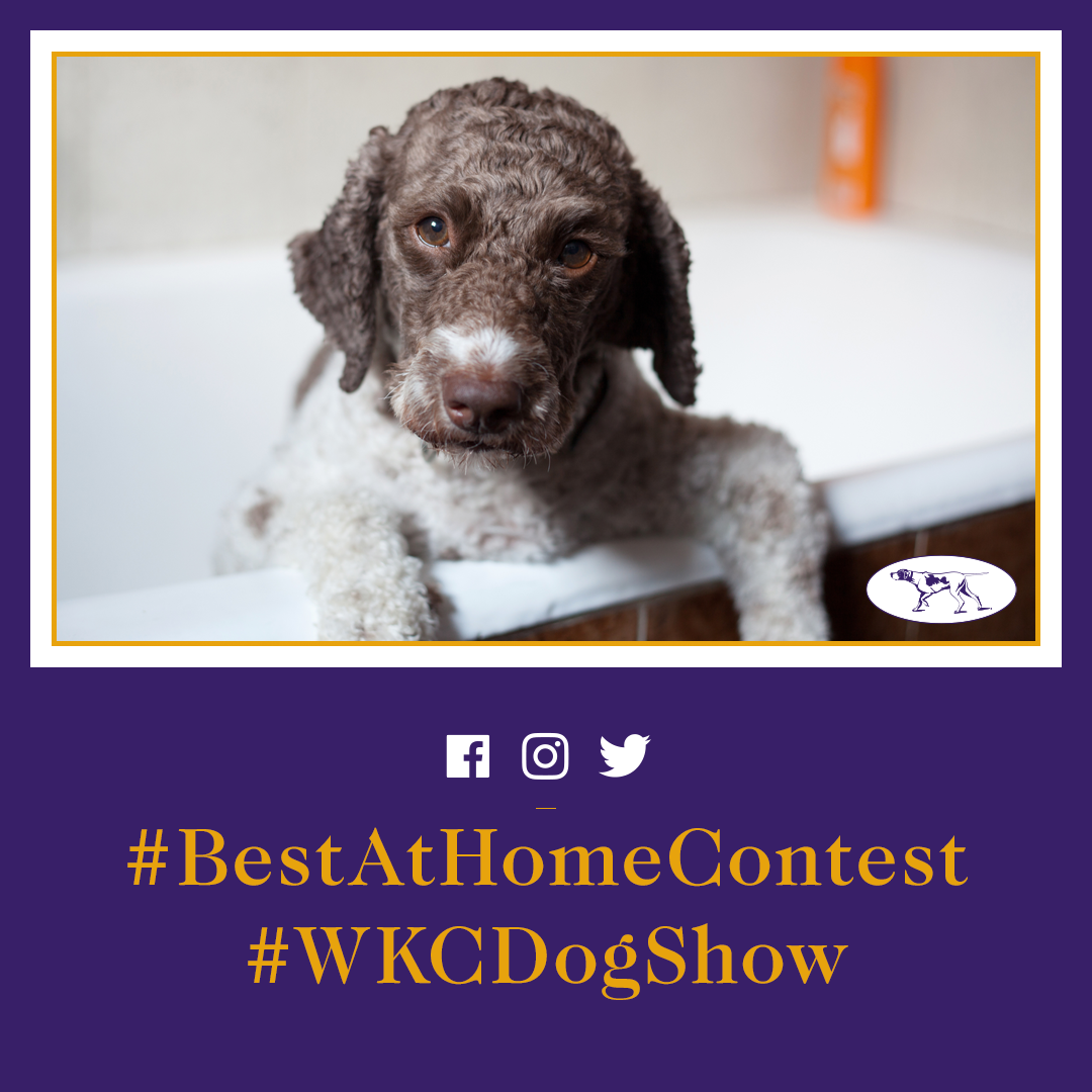 Social Agency GLOW Leads Westminster Kennel Club Dog Show to Record Engagement Among Millennial Audience