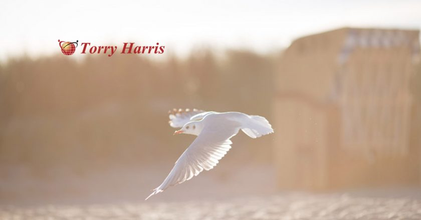 Torry Harris Launches DigitMarket — a B2B2C Platform for all Platforms