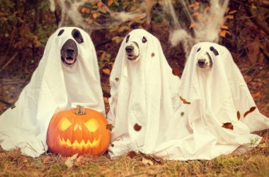 Halloween Special: Are Your Customers GHOSTING You?