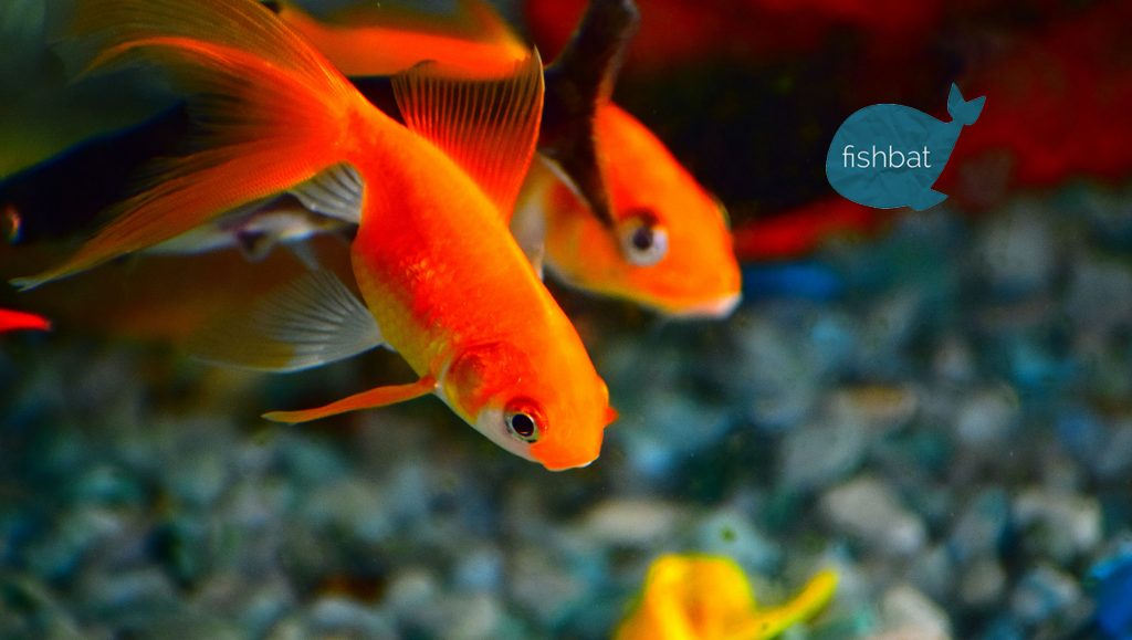 Internet Marketing Firm, fishbat, Discusses 4 Qualities of Successful Social Ad Images